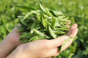 3 Cách rửa mặt bằng trà xanh mang lại hiệu quả bất ngờ